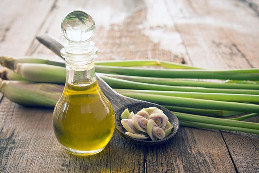 Xông tinh dầu sả cho phòng giúp diệt khuẩn và hỗ trợ giảm stress