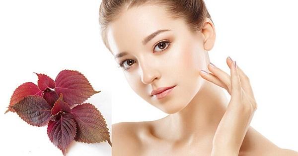 Điều trị nám tàn nhang và làm đẹp da hiệu quả từ lá tía tô